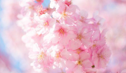 円山公園(京都)のお花見におすすめの周辺駐車場10選!24時間営業の情報まとめ