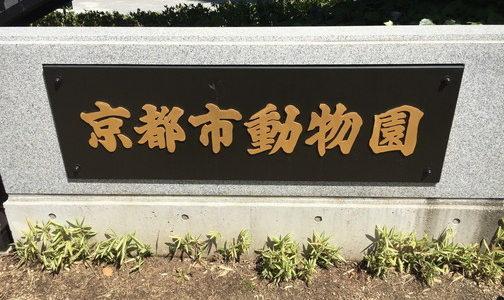 京都市動物園の場所は?京都駅からの行き方はバスか電車どちらがいい?