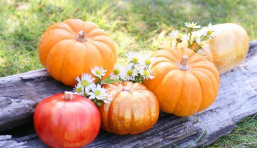 ハロウィンかぼちゃ腐らないコツ!長持ちする作り方や長期保存の方法は?