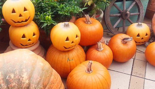 ハロウィンかぼちゃの値段や日持ちはどれぐらい?どこで売ってる?