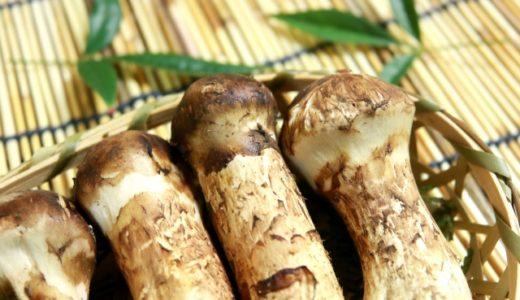 松茸の賞味期限や日持ちする保存方法は?腐るとどうなる?