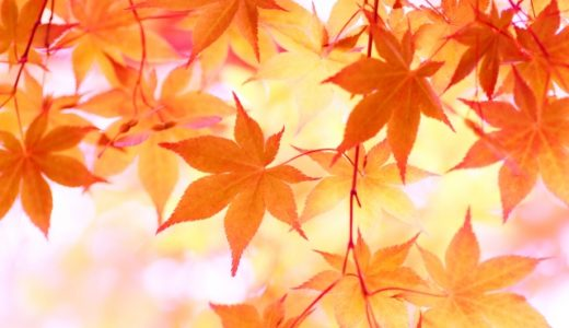 京都の紅葉狩りにおすすめの服装や持ち物について解説!