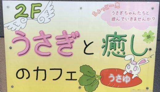 うさぎカフェ大阪うさゆに行ってきたレポ!楽しみ方は?モフモフ癒やしの空間